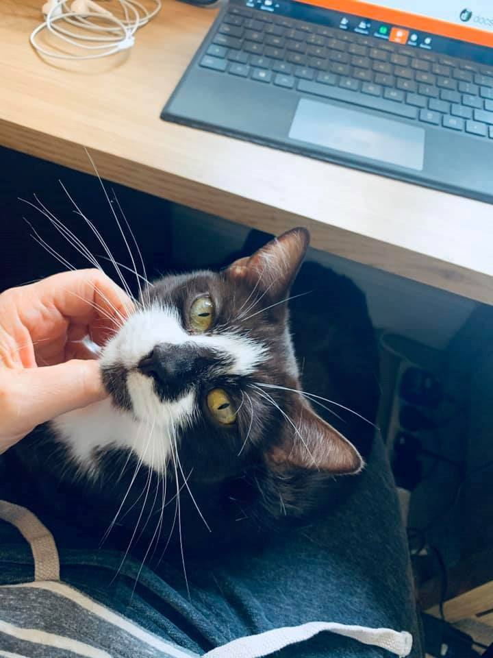 Working from home pets